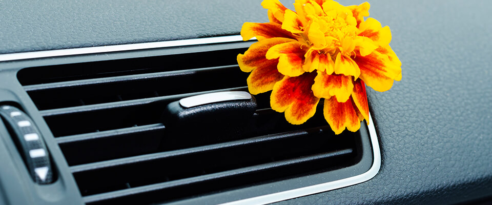 Flower in car air conditioning